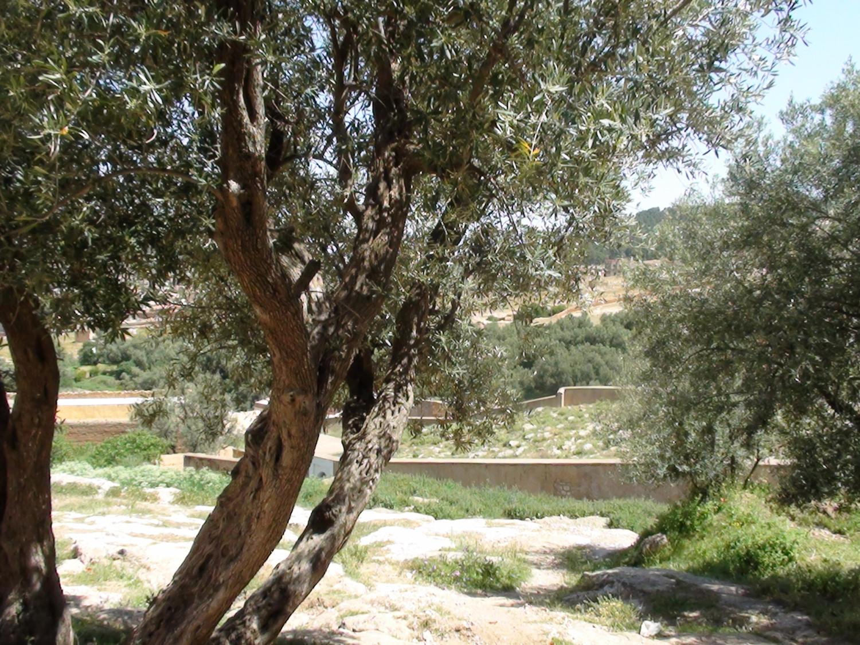 Vue de l'ancien cimetière juif